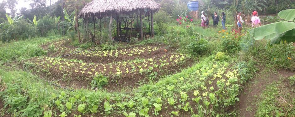 Agroecologia na prática: Comunidades mostram que é possível produzir alimentos saudáveis sem agredir o meio ambiente